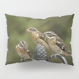 Grosbeaks Three Pillow Sham