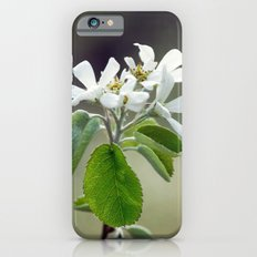 Malus flowers - spring 30 iPhone 6 Slim Case