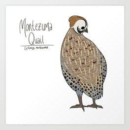 Montezuma Quail Art Print