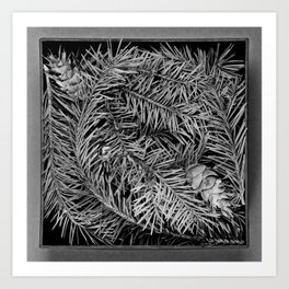 Boxed Organics - Pine Branches Art Print
