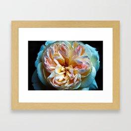 # 310 Framed Art Print