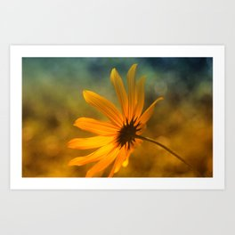 "Black- Eyed- Susan ""Bokeh"" Art Print"
