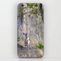 fairytale iPhone & iPod Skins featuring Fairytale by Sara Evans