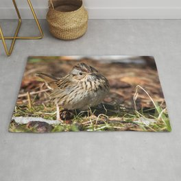Staredown with a Lincoln's Sparrow Rug