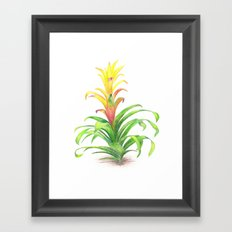 Bromeliad - Tropical plant Framed Art Print