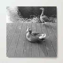 #birds Metal Print