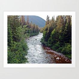 Forest Paradise Art Print