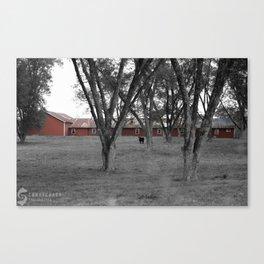 Lonecow Canvas Print
