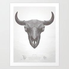 American Bison Skull Art Print