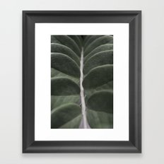 Money Plant Framed Art Print