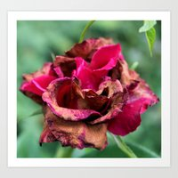 A Rose by Any Other Name Art Print