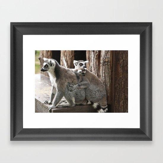 Ring Tailed Lemurs Framed Art Print