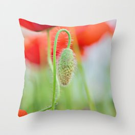 Tender shot of red poppies on the field over blue sky Throw Pillow