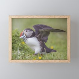 A Puffin's catch Framed Mini Art Print