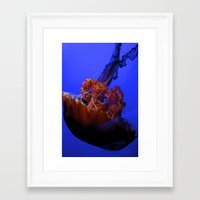 jelly fish Framed Art Prints featuring Jelly Fish Jelly Fish  by EmmaTeele