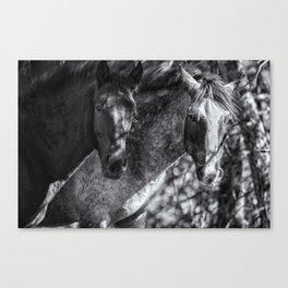 Mica and Malpais BW - Pryor Mustangs Canvas Print