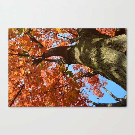 Looking Up Canvas Print