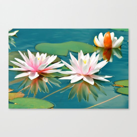 Waterlily 250 Canvas Print