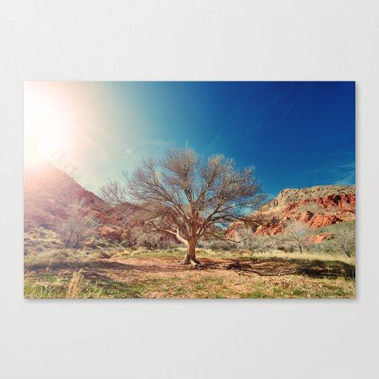 Sun desert tree Canvas Print