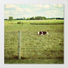 resting cow Canvas Print