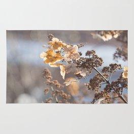 Sunlight through Dried Flowers Rug