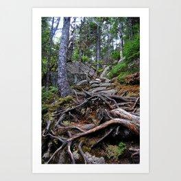 A Treacherous Trail Art Print