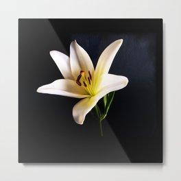 Single White Lily on black Metal Print