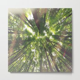 "The trees say ""Hello"" Metal Print"