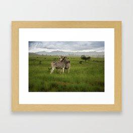 Swaziland Zebras Framed Art Print