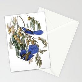 Florida Jay - Vintage Illustration by J.J. Audibon Stationery Cards