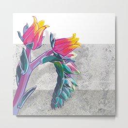Echeveria elegans Metal Print
