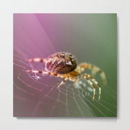 Spidery  Metal Print
