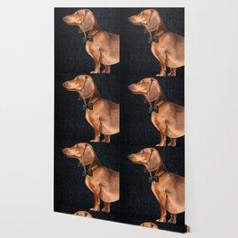 Elegant dachshund. Wallpaper