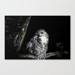 Fine Art Owl Canvas Print