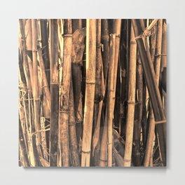 Bamboo in warm light Metal Print