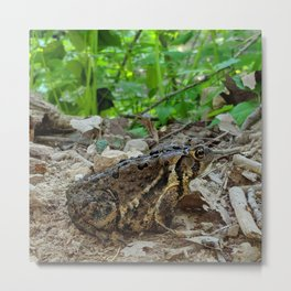 Big Toad On A Path In The Forest Metal Print
