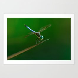 Green_dragonfly Art Print