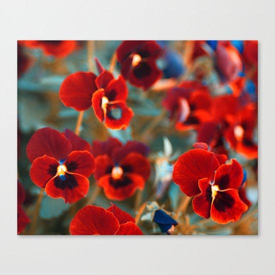 Red violas. Canvas Print