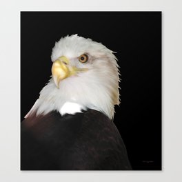 Bald Eagle On Black Canvas Print