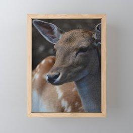 Fallow Deer Framed Mini Art Print
