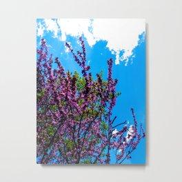 Spring Blooms in Maine (3) Metal Print