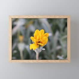 Yellow Flower Close-Up Photo Framed Mini Art Print
