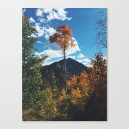 Fall Change Canvas Print