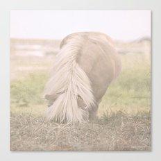 Little Pony Canvas Print