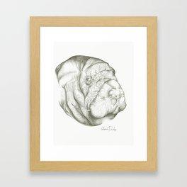The Mighty Manatee  Framed Art Print