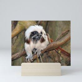 Cotton-top Tamarin Mini Art Print