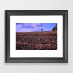 The Lonely Pumpkins Framed Art Print