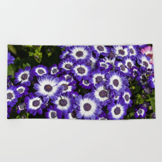 Cineraria Purple Beach Towel