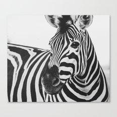 The Thoughtful Zebra Canvas Print