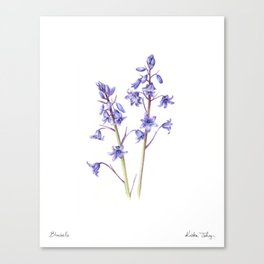 Bluebells Canvas Print